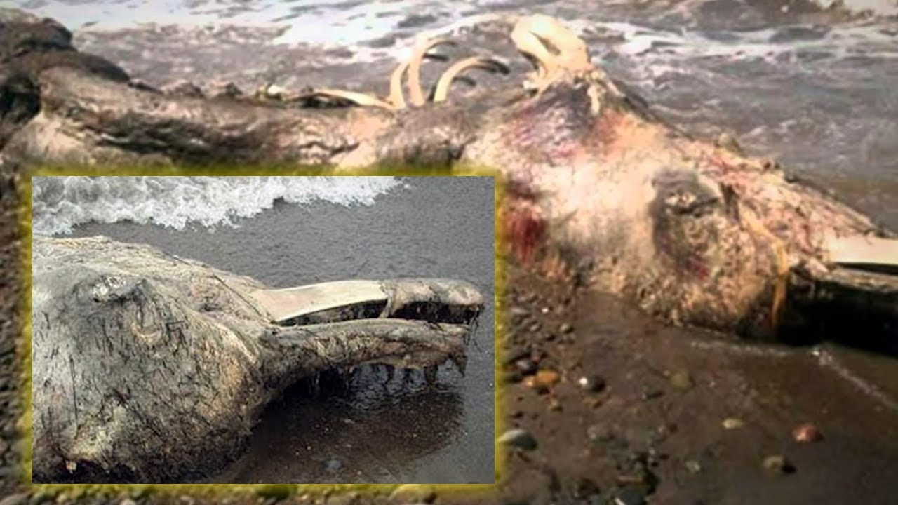 5 Most Mysterious Creatures Caught in California!