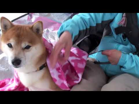 Cute is Not Enough | Funny Cats and Dogs Compilation | Pet Center p15