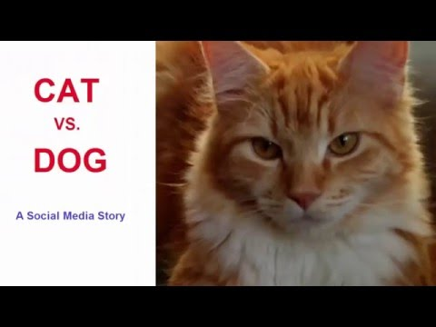 Cat vs Dog: Scotty's Business, A Social Media Story involving a Cat, Dog and Facebook