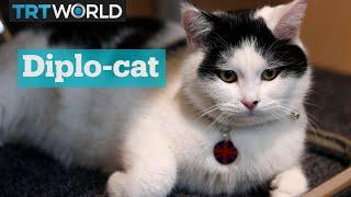 Download Lagu Meet 'chief mouse-catcher', the UK's overseas diplo-cat Gratis STAFABAND