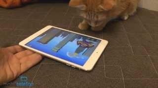 Игры для кошек на iPad: Game for Cats, Paint for Cats и Catzilla
