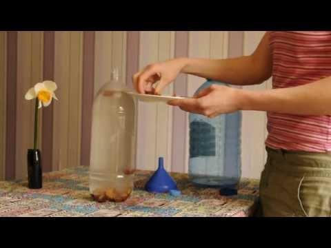 Брага из берёзового сока в домашних условиях 375