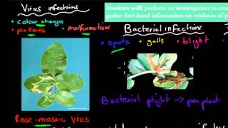 SB.7.2. Evidence of pathogen and insect pests (HSC biology)