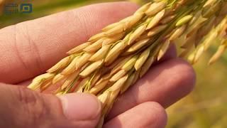 بعد «الانفجار النووي».. إجراءات فحص القمح الروسي بمصر