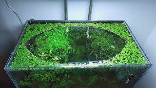 14th Month - (The Baby Becomes the Alpha) NO filter, NO CO2, NO Ferts 5 Gallon Nano Tank