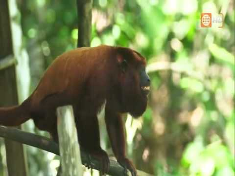 Selva Peru - Documental Amazonas - Parte 1 [Full HD 1080p]