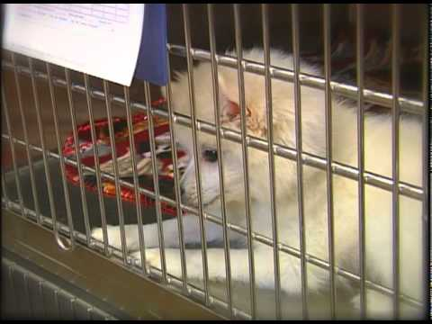 Journey through the Edmonton Humane Society