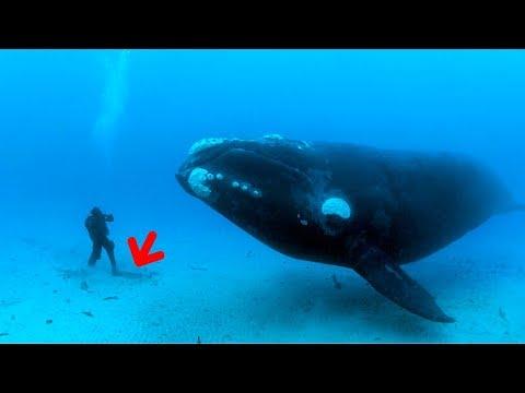 समुंदर कि असल गहराई आपको चौका देगी . (This is how Deep The Ocean is)