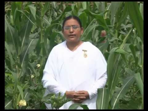 Sustainable Agriculture - Yogik Kheti - Brahma Kumaris - Hindi (full) video