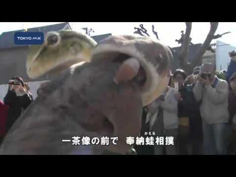 足立区・炎天寺 「一茶まつり」奉納蛙相撲でにぎわう 純野静流 検索動画 20