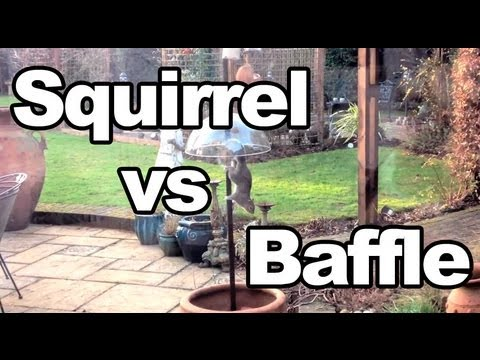 Squirrel vs Anti-Squirrel Baffle