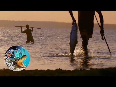 Aboriginal Spearfishing & Cooking - FISHING THE WILD FLASHBACK