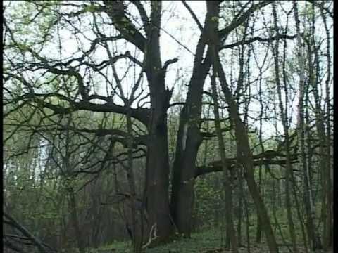 ЗОЛОТО БАНДЫ ФОМИНА