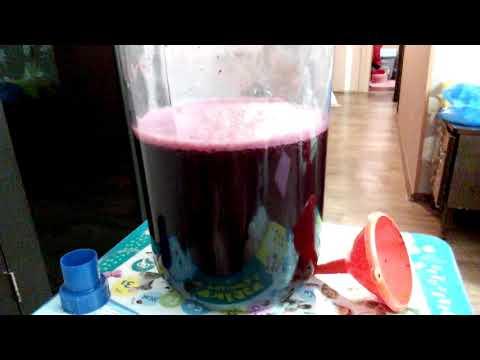 Сделать вино из изабеллы в домашних условиях 682