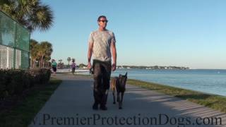 Premier Protection Dog at the Beach Walk