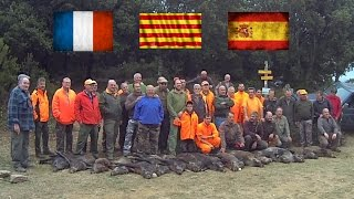 Chasse au sanglier internationale - Battue France Espagne - international wild boar hunting