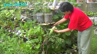 Growing food in containers at home