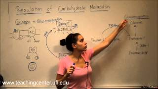 Regulation of Carbohydrate Metabolism