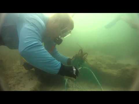 Mini Season 2011 Lobster Diving Florida Keys GoPro HD