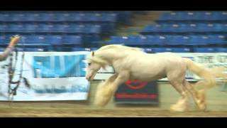 2012 Feathered Horse Classic - At Liberty - Pink Panther