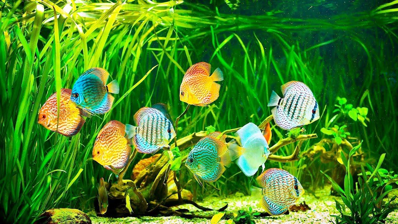 How to Set Up a Saltwater Fish Tank Aquarium Care - YouTube