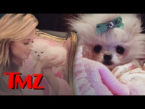 Paris Hilton Buys Primo Pups!