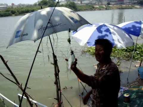 ตกปลากับโจ้เจ้าพระยา ตอน ตกปลาตะโกก แมน้ำเจ้าพระยา เมษายน 2553