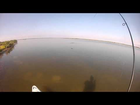 419 Fishing, Mosquito Lagoon Indian River Lagoon Sight Fishing Redfish WASPcam