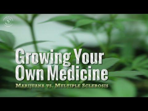 Growing Your Own Medicine: Marijuana vs. Multiple Sclerosis