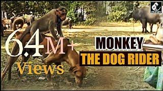 MONKEY THE DOG RIDER.