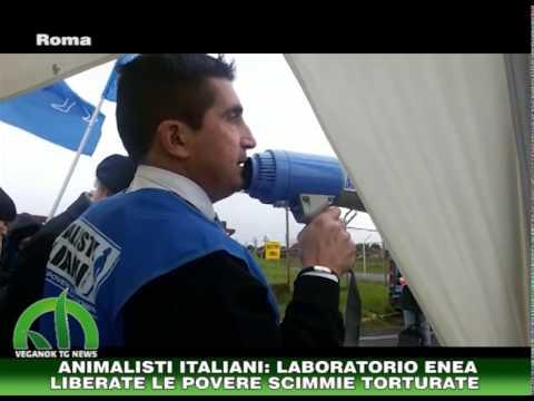 Animalisti Italiani davanti al centro sperimentazione ENEA a Roma ( VeganOK TG News 12-2-2015)
