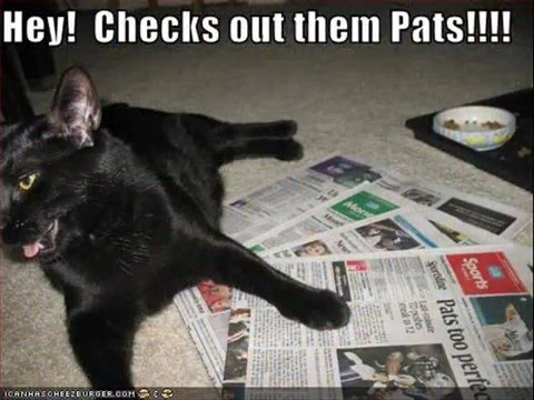 Funny LOL Cats! You might pee your pants.