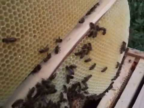 Пчеловодство. Ещё немного о строительной рамке.
