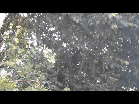 Samsung Galaxy S4 Zoom - Esimerkkivideo
