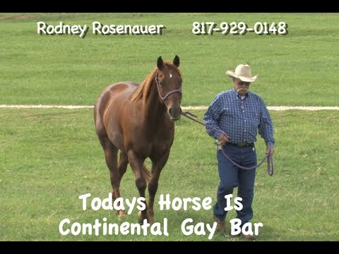 American Quarter Horses For Sale in Texas Quarter Horse For Sale ft