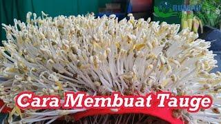 Download Lagu How to Make Mung Bean Sprouts Gratis STAFABAND