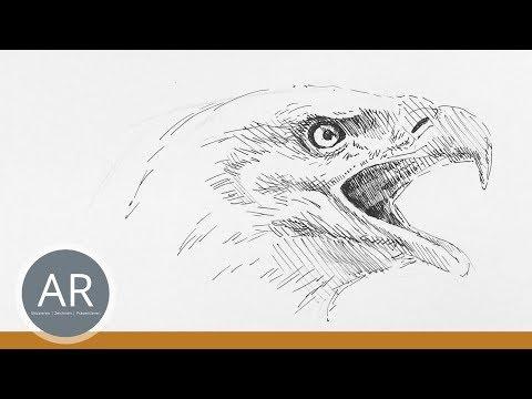 Tierskizzen. Tiere schnell zeichnen lernen. Zeichenkurs Tierportraits.
