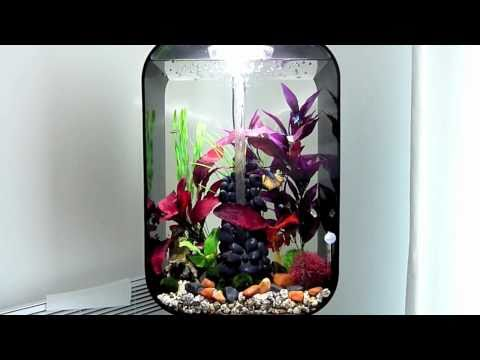 60l biorb life with halfmoon betta and wccm 39 s how to for Decoration aquarium 60 litres