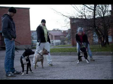 Klaipėdos šunų mylėtojų grupė