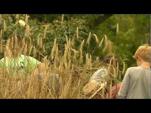 Waldorfschule - Ökologische Erziehung