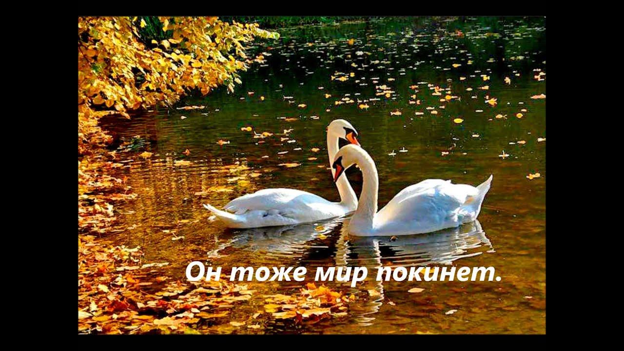 Лебеди символ любви и верности поздравление