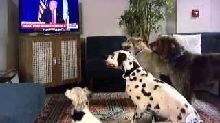 Donald Trump makes white dogs sit on command via TV
