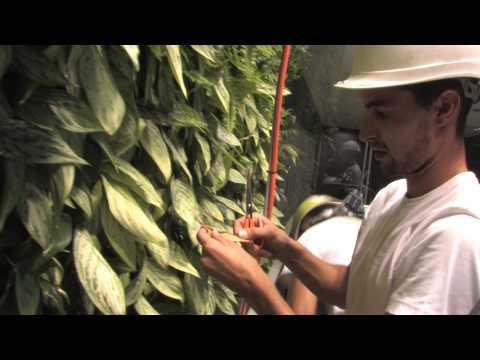 Jardines verticales y Ecosistemas Verticales (Documental completo)