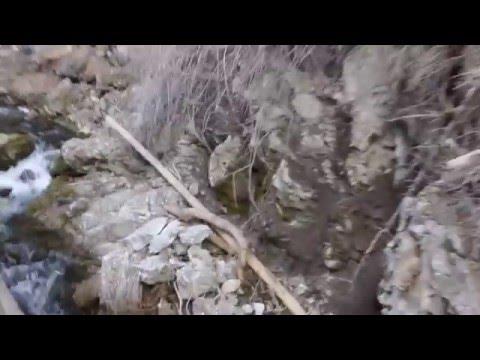 Bigfoot Sighting in Utah Payson Canyon Breakdown