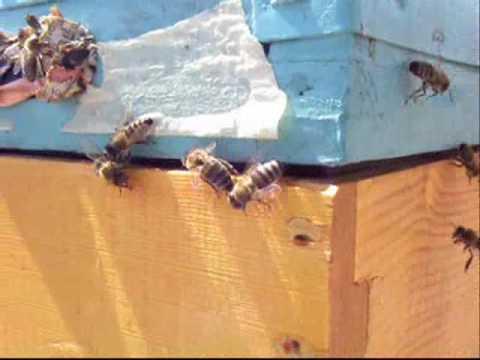 Λεηλασία Μελισσών Music Videos