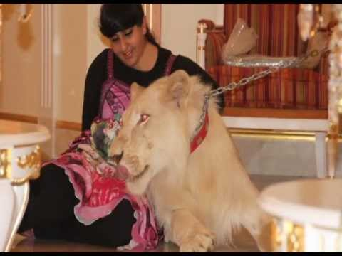 "Celebrating the 4th Birthday of Sheikha Latifa s  Lion ""Baby""."