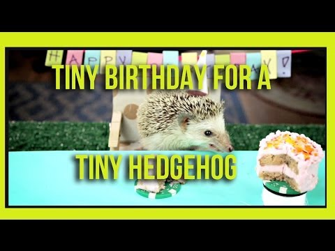Tiny Birthday For A Tiny Hedgehog (ep. 2) video