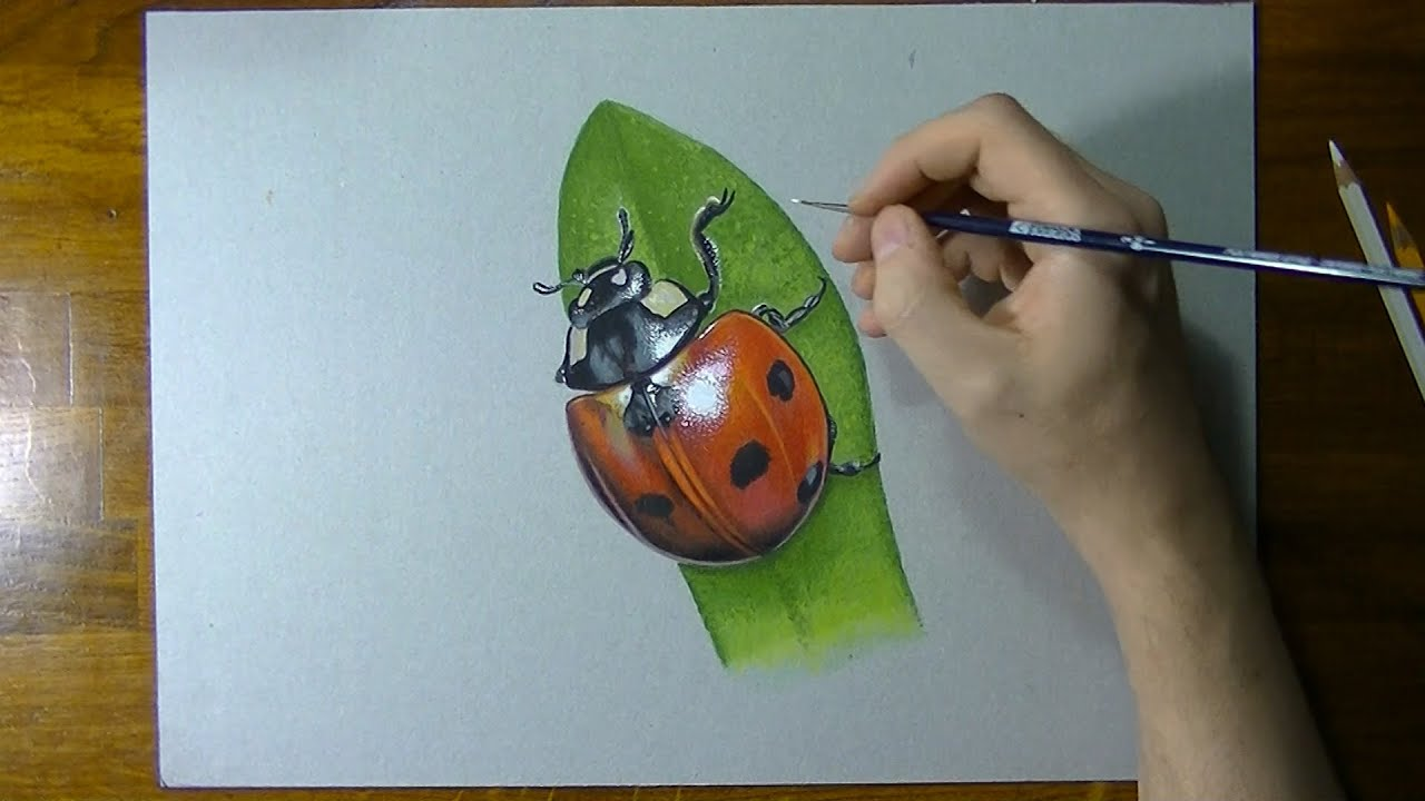 How to Draw a Ladybird forecasting