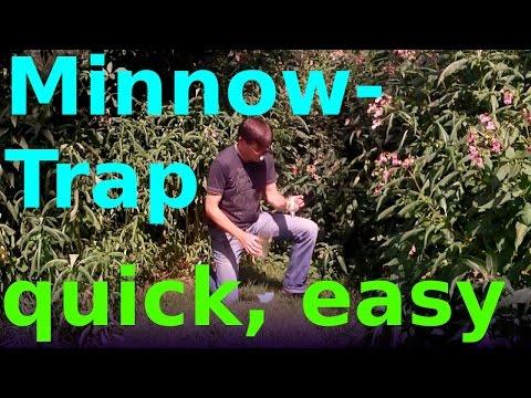 how to make a minnow pond