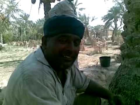 punjabi work in Bahrain